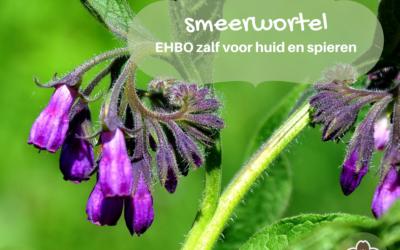 Smeerwortel – EHBO